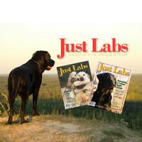 justlabsmagazine.com Logo