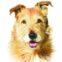 whole-dog-journal.com Logo
